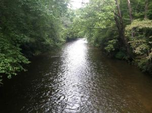 Davidson River Campground - photo from Cradle of Forestry Interpretive Association